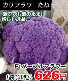 花野菜 F1パープルフラワー