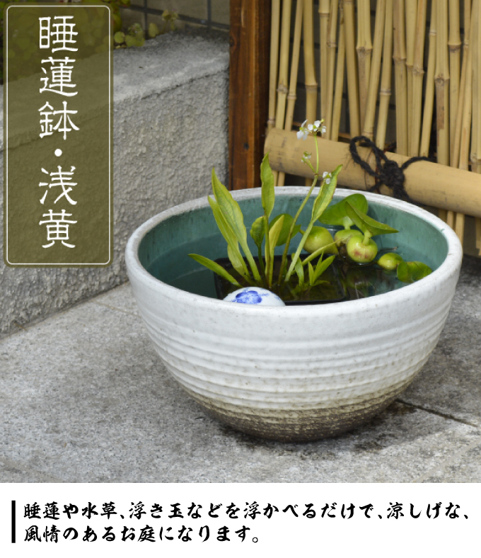 睡蓮鉢・浅黄