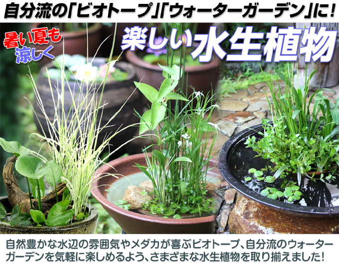 水生植物トップ