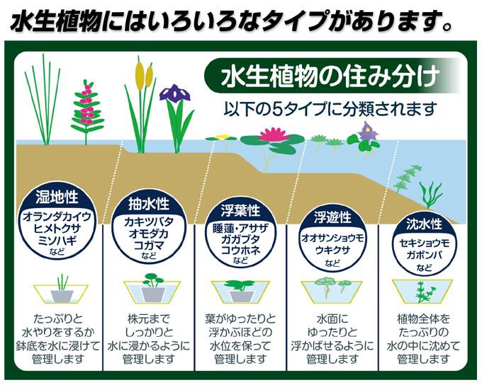水生植物タイプ