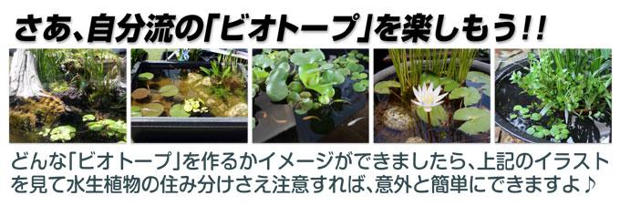 水生植物ビオトープ