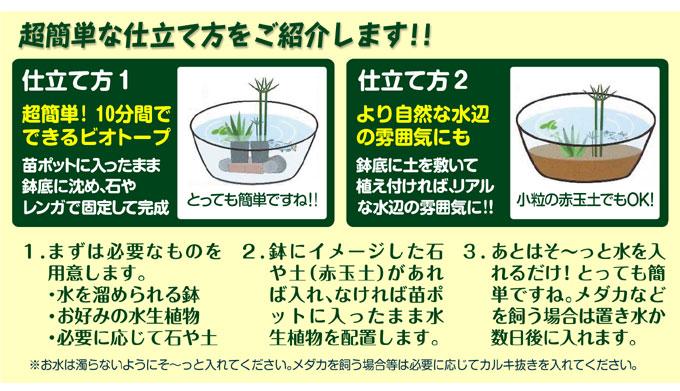 水生植物仕立て方