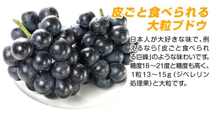 ブドウ 苗木 ナガノパープル 美味しい