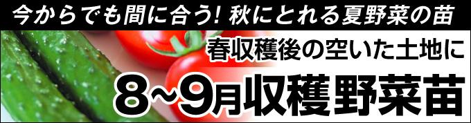 8~9月収穫野菜苗