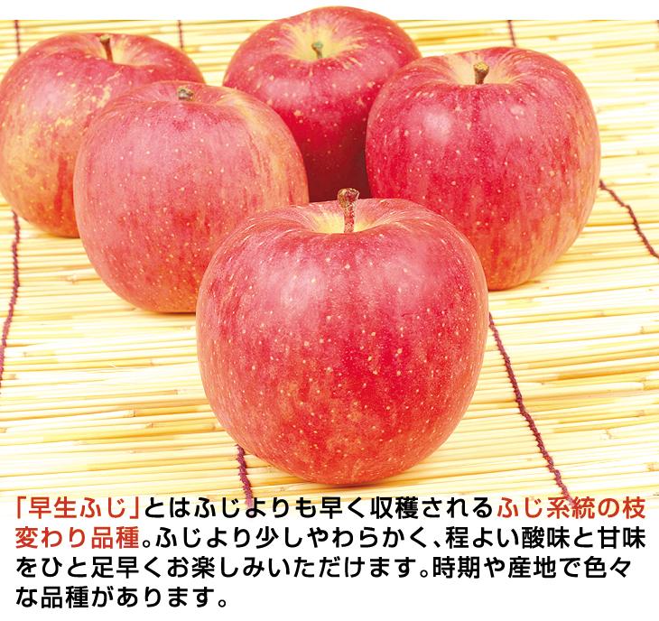 青森大特価早生ふじ説明01