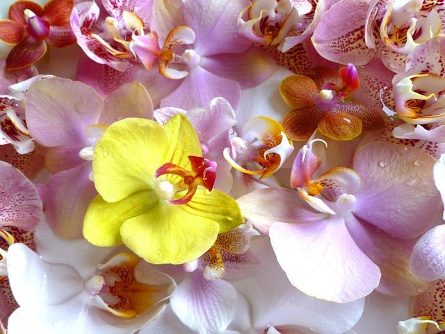店頭に飾られた胡蝶蘭